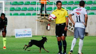 Perro corriendo en el partido de Ascenso MX