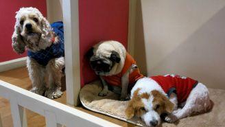 La delegación con más robos de mascotas es Tlalpan